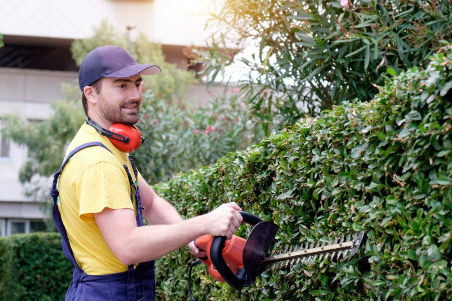 SHRUB AND HEDGE PRESERVATION